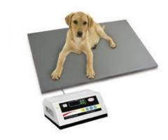 platform scale, floor scale, weighing system