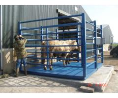 Heavy Duty Animal Scales in Uganda