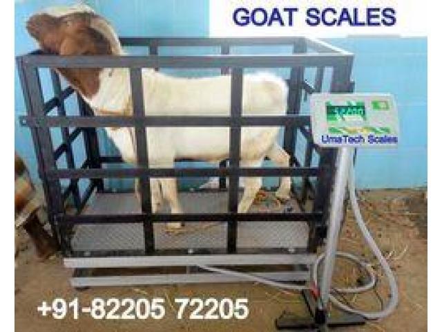 Light Duty Animal Scales in Uganda