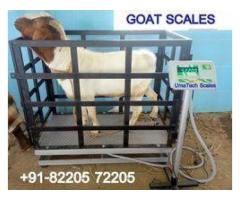 Light Duty Animal Scales in Uganda