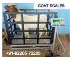 Goat Sheep Animal Weighing Scales in Uganda
