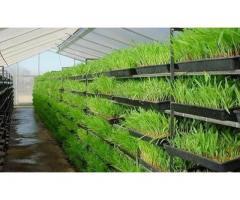 Hydroponic fodder systems