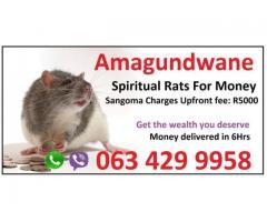 money spells ads Spiritual Rats amagundane usa uk