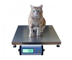 Pet platform wegihng scales