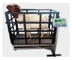 Large platform electronic dog pet scale