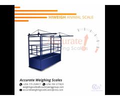 .Sheep scales in stock Jinja Uganda
