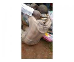 Genuine Money spells in UGANDA/Kenya+256780407791#