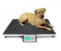 Pet platform weighing scales