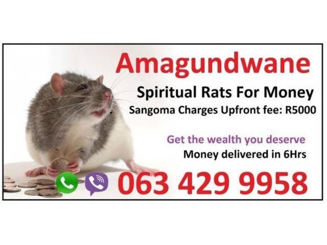 Money Spells with spiritual rats