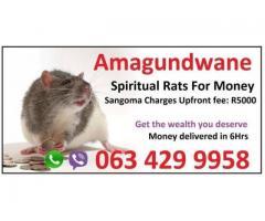 Spiritual rats for Money Spells in Durban